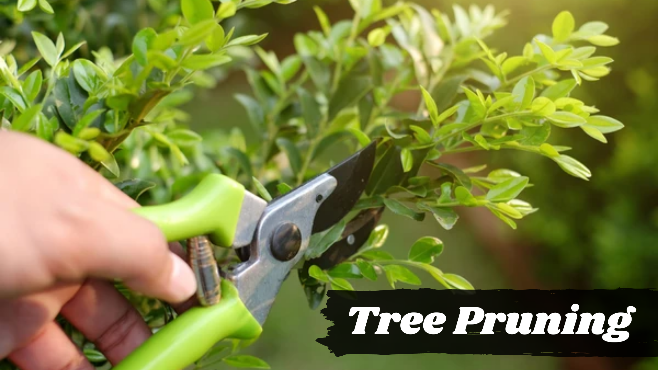 best time to tree pruning