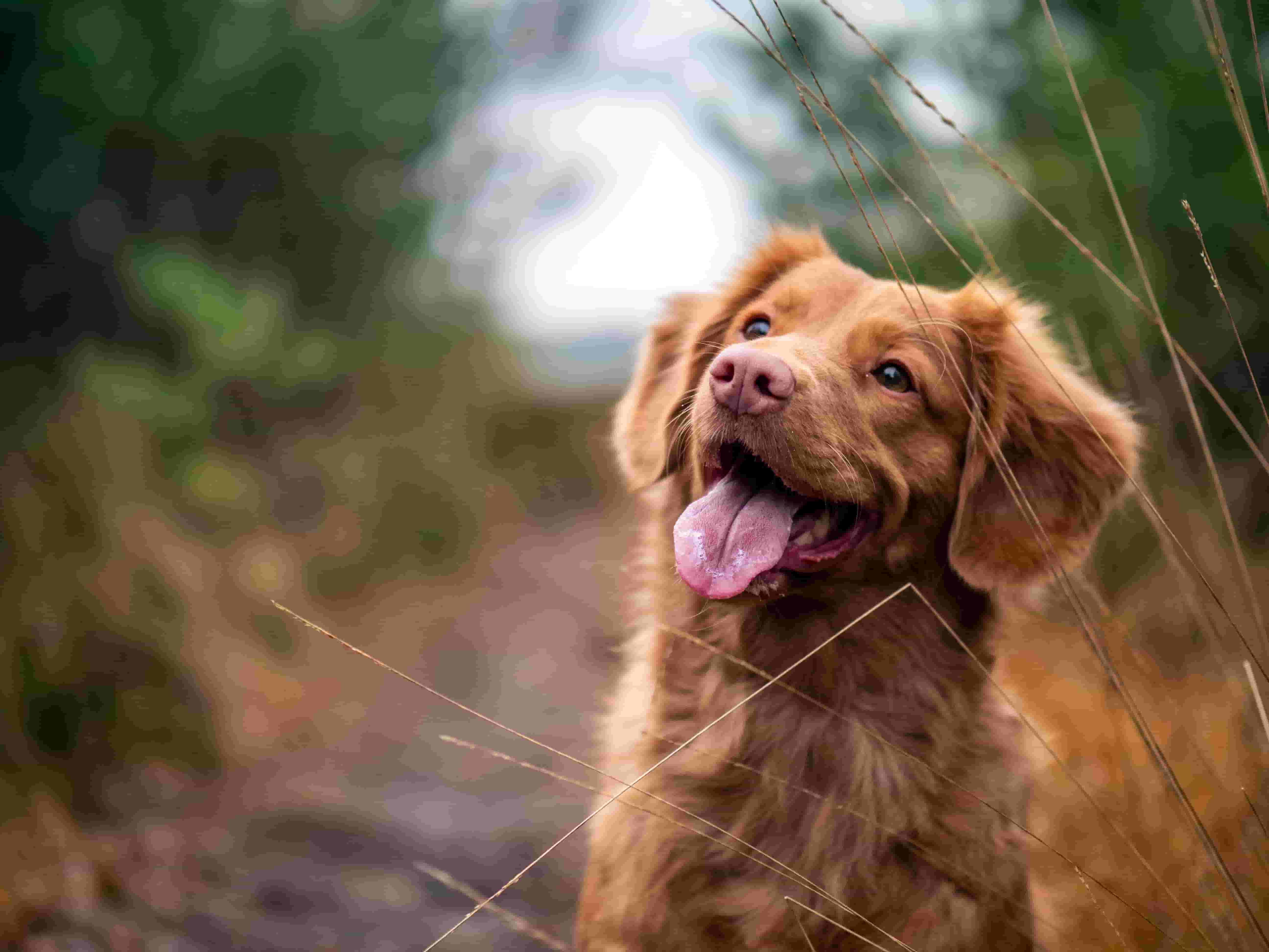 best breed dogs for kids
