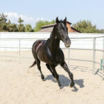 Perfect Gift Ideas for Horse Lovers and Equestrians